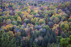 Fall treetops Royalty Free Stock Images