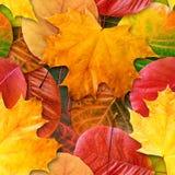 Fall treibt nahtloser Hintergrund Blätter. Stockfotos
