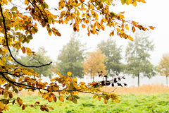 Fall tress in the Netherlands Stock Photos