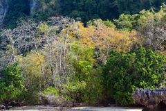 Fall tropical colors Royalty Free Stock Images
