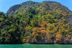 Fall tropical colors Royalty Free Stock Image