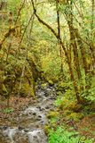 Fall Umpqua Royalty Free Stock Photography