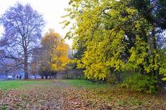 Fall urban environment Stock Photo