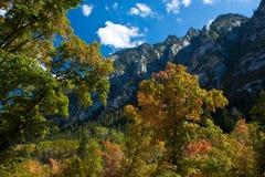 Fall in Utah Royalty Free Stock Image