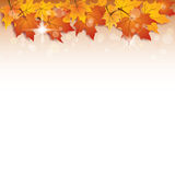 Fall vector background Royalty Free Stock Photo