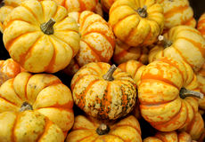 Fall Vegetables Royalty Free Stock Images