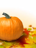 Fall vegetables as a background including pumpkins Royalty Free Stock Images