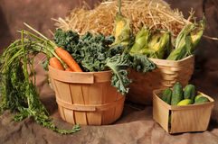 Fall Vegetables in baskets. Fall vegetables including carrots and corn with hay background, in farmer's baskets Royalty Free Stock Images
