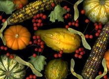 Fall Vegetables on Black Stock Photo
