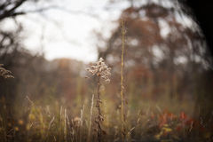 Fall vegetation in a field in the woods. Stock Image