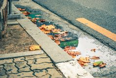 Fall verlässt in der Straße und in der Pflasterung stockbild