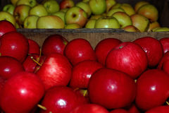 Fall in Vermont. Photo of apples in Vermont during fall time Royalty Free Stock Image