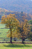 Fall in Vermont. Photo of a horse rider in Vermont during fall time Stock Photography