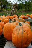Fall in Vermont. Photo of pumpkins in Vermont during fall time royalty free stock photo