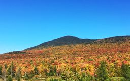 Peak Leaf Season in Vermont. A view of the majestic Mount Abraham in Lincoln Vermont in Autumn with brilliant leaf colors climbing the mountain Royalty Free Stock Images