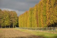 Fall in Versailles Stock Photos