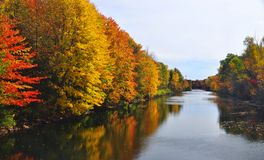 Fall View. A golden autumn shoreline along a lake in fall time Royalty Free Stock Photography