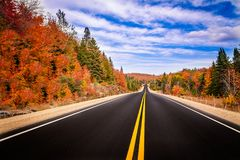 Fall View. A road going through colorful fall trees Stock Images