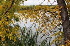 Fall view at Wascana Lake. Colorful Fall view at Wascana Lake Regina Saskatchewan Royalty Free Stock Photography
