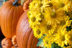Fall Vignette with Yellow Chrysanthemum Flowers and Pumpkins on a Front Porch Royalty Free Stock Photo