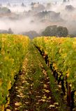 Fall Vineyard. Row of a vineyard early in the morning in the fall royalty free stock photos