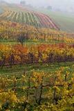 The fall vineyard Royalty Free Stock Image