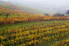 The fall vineyard Royalty Free Stock Photos