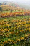 The fall vineyard in Moravia Stock Photo