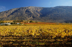 Fall Vineyards15 Royalty Free Stock Photography