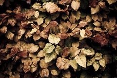 Fall vintage background. Grungy vintage background of leaves.personal editing Stock Photos