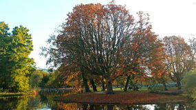 Fall in the Vondelpark in Amsterdam Netherlands Royalty Free Stock Photos
