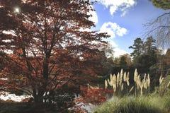 Fall wässert und betäubt klare Farben über Seen lizenzfreies stockbild