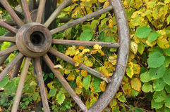Fall Wagon Wheel Vines Stock Images