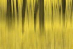Fall in Wald Lizenzfreie Stockfotografie