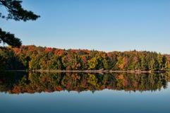 Fall-Wald Lizenzfreies Stockbild