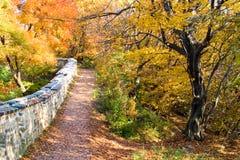 Fall in Wald Stockfotos
