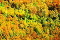 Fall-Wald Lizenzfreie Stockbilder