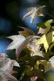 Fall-Wald - Blätter stockfotos