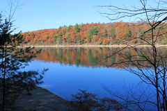 Fall at Walden Pond, Concord, MA. November morning oaks Stock Image