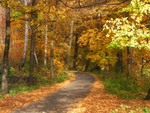 Fall walk. Beautiful place for a walk and relax Royalty Free Stock Photos