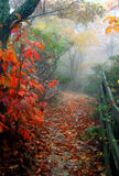 Fall walk. Misty pathway with fall trees Royalty Free Stock Photography