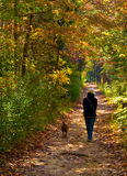 Fall Walk. Girl walking her dog through the woods during fall stock photography