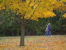 Fall Walk Royalty Free Stock Photo