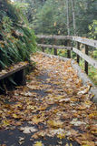Fall walkway Stock Photography