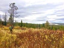 Fall-Wanderung durch die Weiden und die Kiefern stockfoto