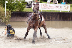 Fall at the water. Eventing rider falls at a water jump the rider is wearing the newly developed air jacket which has inflated and helped to prevent injury Royalty Free Stock Photos