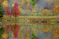 Fall water reflections in a small pond. Royalty Free Stock Photo