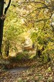 Fall - way in autumn Stock Image