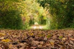 Fall-Weg bedeckt in den Blättern Lizenzfreies Stockfoto