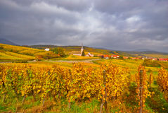 Fall-Weinberg Lizenzfreie Stockfotos